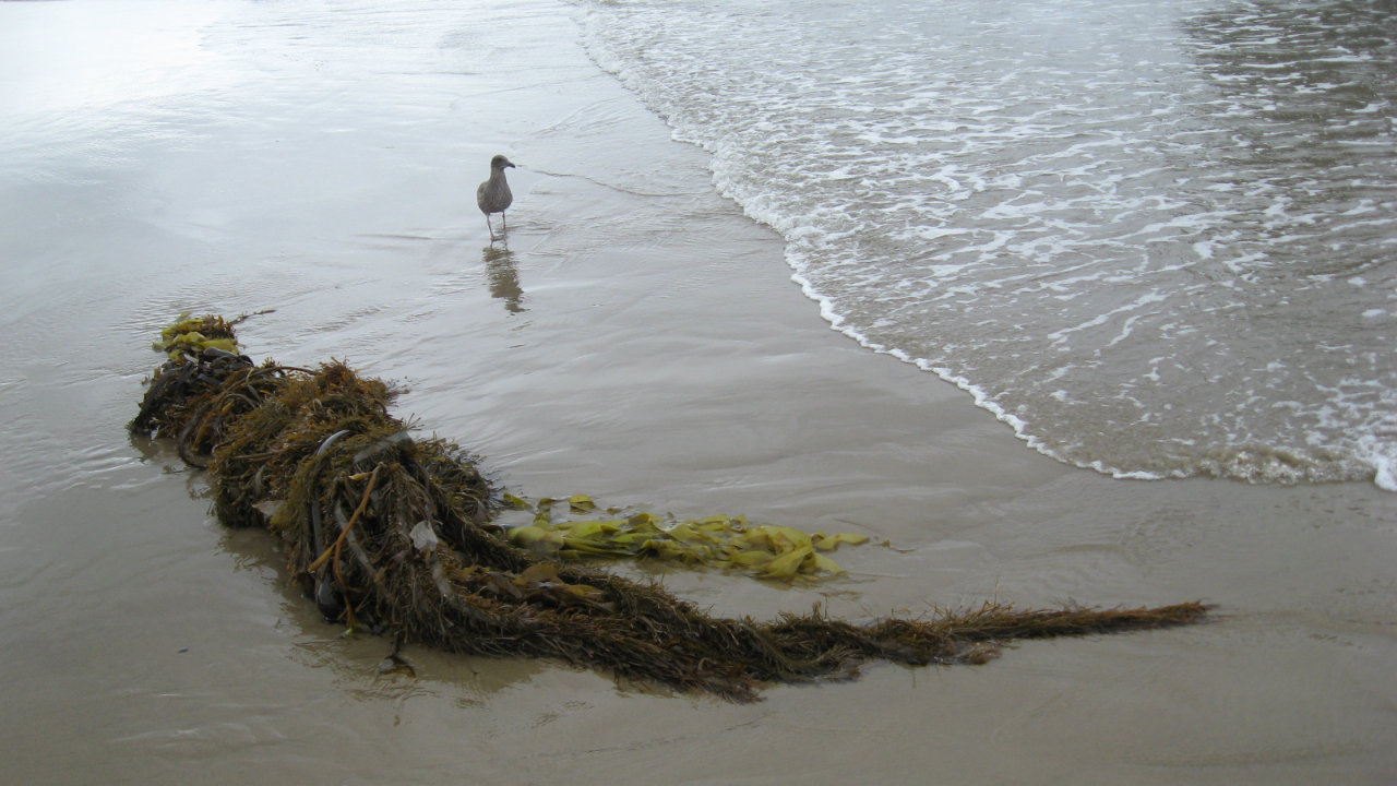 A small bird on the wet sand as the waves recede