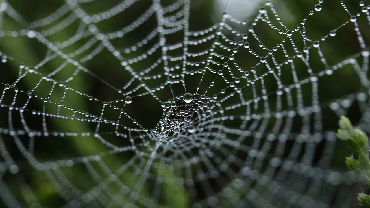 A spider web covered in water drops